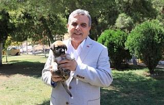 Beyazgül, Hayvan Barınağı'nı ziyaret etti