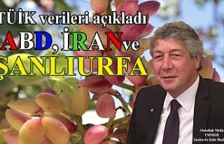 Türkiye'de yetişen fıstığın ana yurdu Urfa...