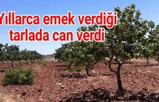 Urfa'da akıl almaz ölüm!