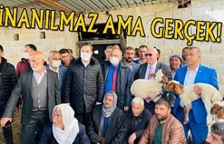 Tigem'de koyunlar gözaltına alındı...