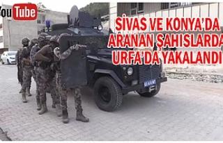 Urfa'da geniş kapsamlı operasyon!