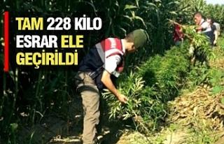 Urfa'da Bağlarda Esrar Operasyonu