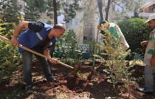 Haliliye'de parklar yenilenip güzelleşiyor