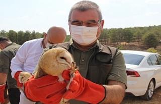 Urfa'da Peçeli Baykuşlar doğaya bırakıldı