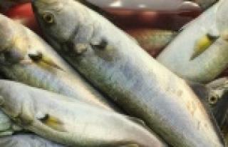 Elektrikle balık avlayan Suriyeli'ler yakalandı...