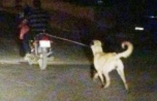 Köpeğe motosikletli işkence