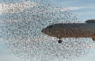 Uçak bir kuşa çarparsa ne olur?