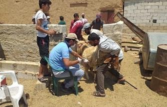 Sınır ötesinde tarım ve hayvancılık destekleniyor