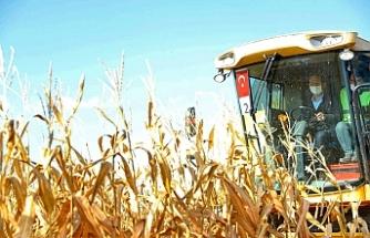 Bakan Soylu Şanlıurfa'da mısır tarlasını sürdü...