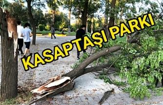 Fırtına ağaçları bu hale getirdi
