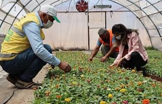Urfa Büyükşehir'in kendi ürettiği çiçekler göz kamaştırıyor