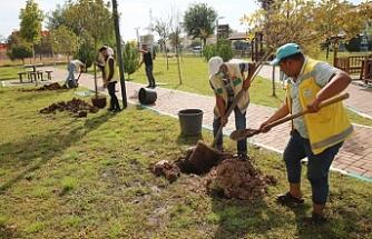 Haliliye'de ağaçlar toprakla buluştu