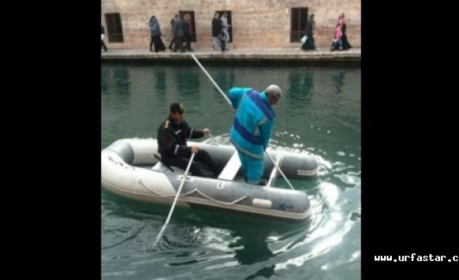 Botla Balıklıgöl'e girdiler