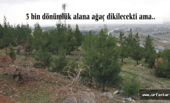 Urfa'da ağaç dikimine kamu engeli!