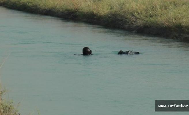 Bir boğulma vakası da Eyyübiye'den…
