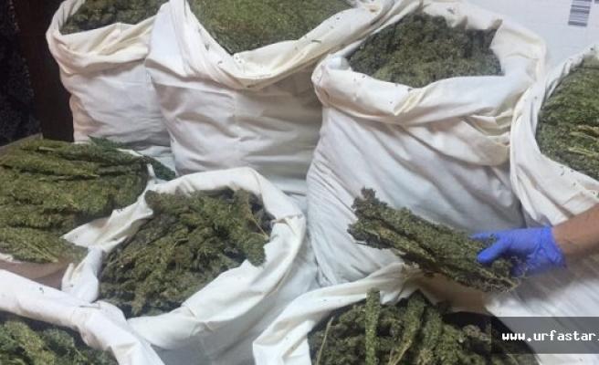 Urfa'da uyuşturucu ticaretine büyük darbe!