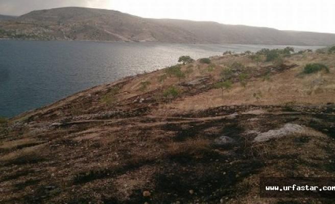 Fıstık ağaçlarını ateşe verdiler..
