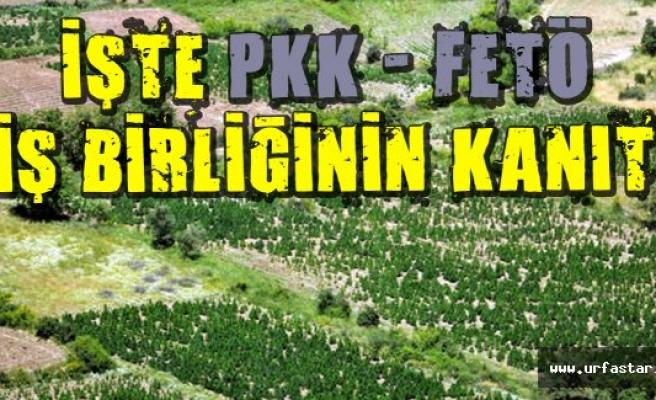 PKK'nın para kaynaklarını sıraladı