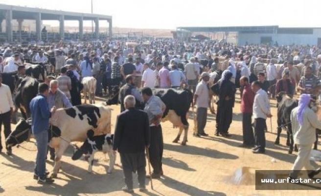 Urfa'da hayvan pazarı hareketlendi