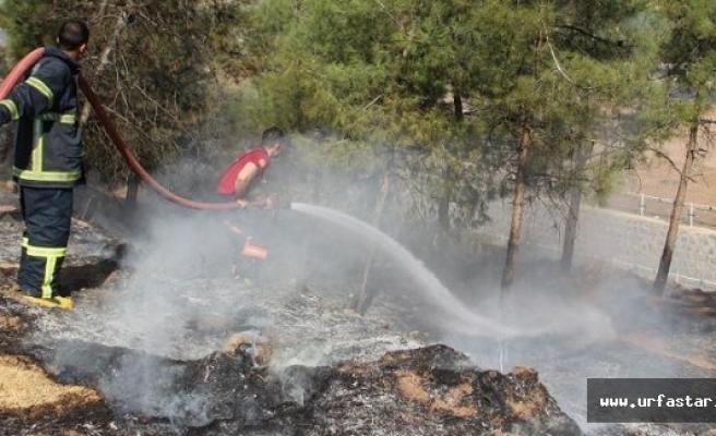 Urfa'da ağaçlık alanda yangın