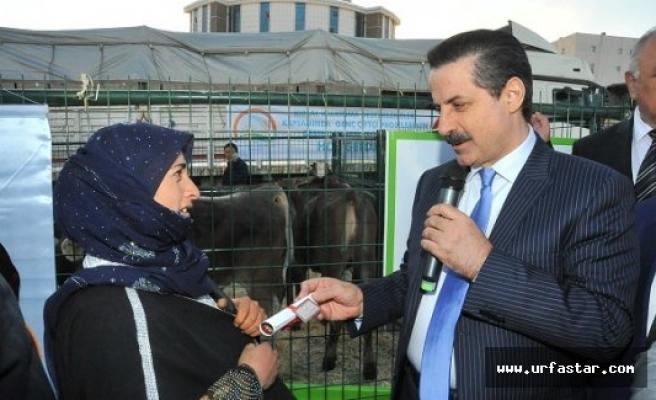 Genç Çiftçilere hibe edilen hayvanlar teslim edildi