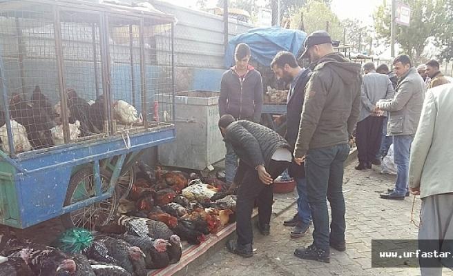 Beykapısı'nda Yılbaşı Hindisi Satılmaya Başlandı