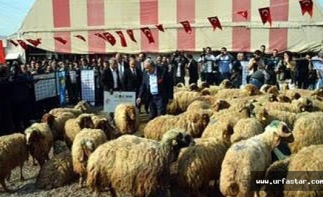 Fakıbaba:Halk bizden yüz çevirdi