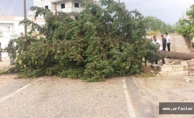 Urfa'da yağan yağmur hangi bölgeleri vurdu?