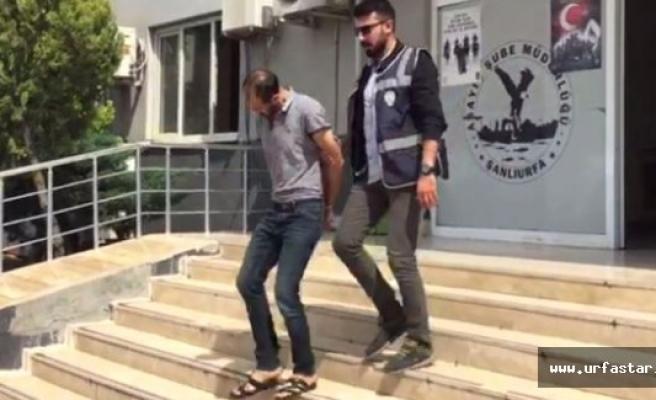 Urfa'da Yakalanan Hayvan Hırsızı Tutuklandı