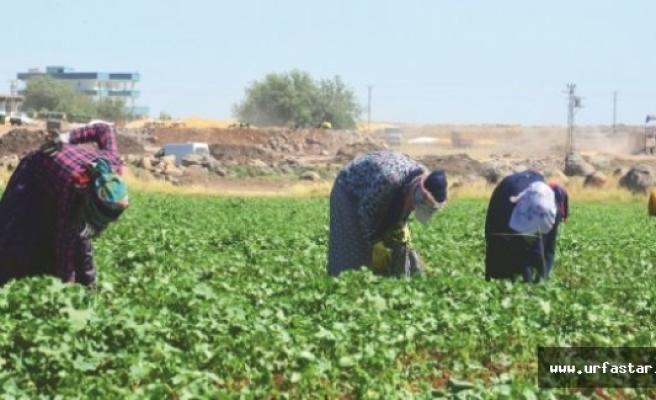 1 Milyon çiftçiye teşvik müjdesi...