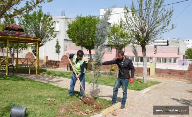 Hilvan Belediyesi Ağaçlandırma Çalışmalarına Devam Ediyor