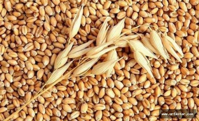 Urfa Ticaret Borsası'nda buğdayın fiyatı belli oldu