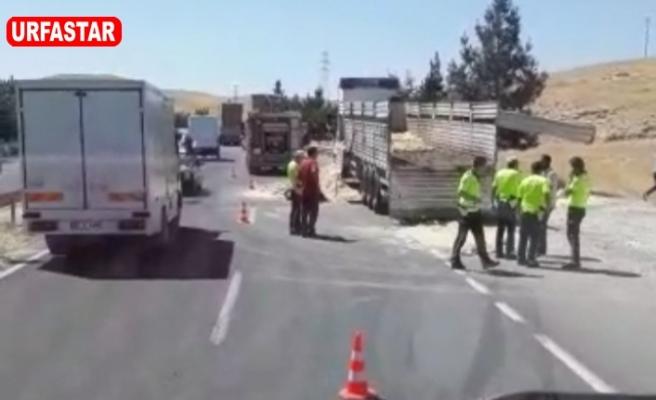 Urfa Antep yolunda kaza! Kurbanlık hayvanlar yola saçıldı