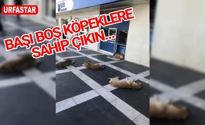Sahipsiz köpekler sokakta böyle uyuyor!