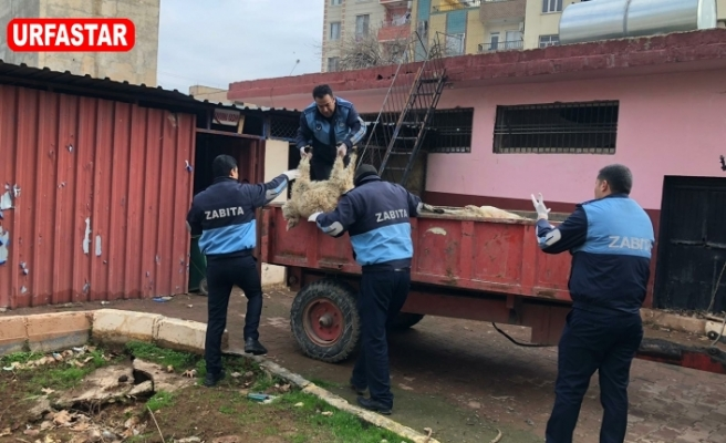 Viranşehir'de flaş operasyon!
