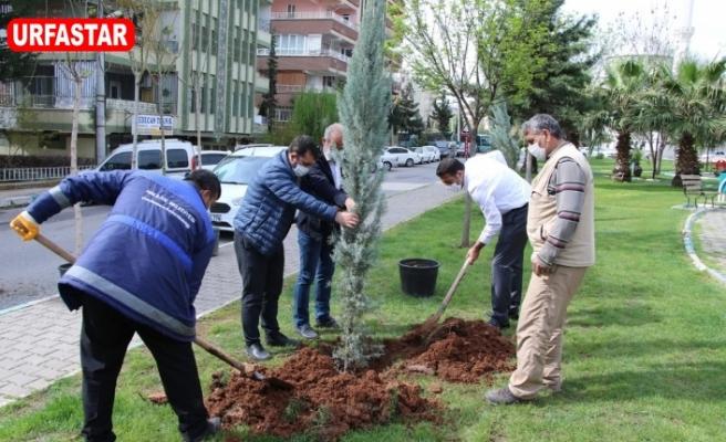 Haliliye'de ağaçlandırma çalışmaları başladı