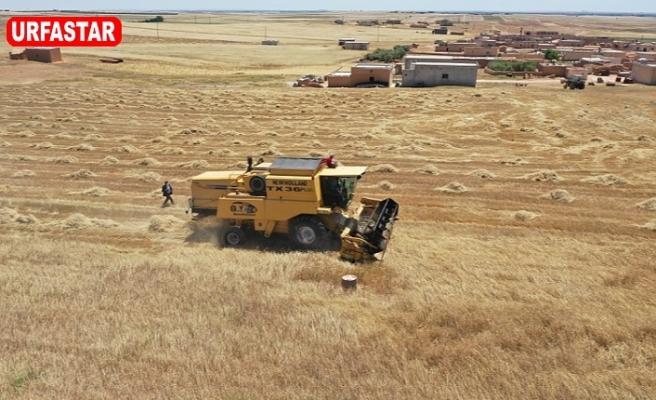 Barış Pınarı bölgesinde hasat sevinci