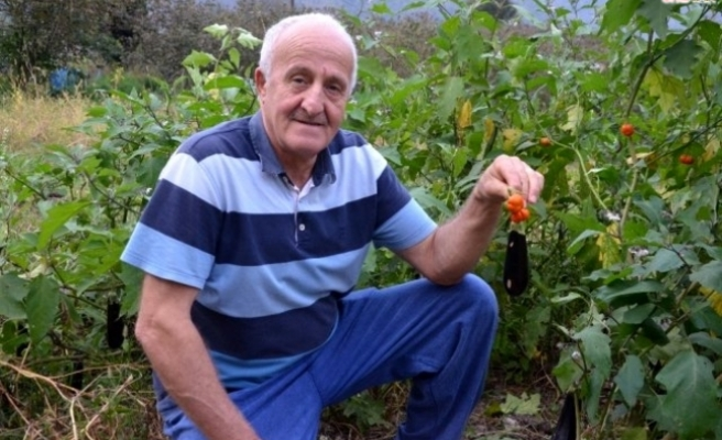 Patlıcan ekti domates çıktı!
