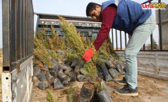 Haliliye kırsalında yeşillendirme seferberliği
