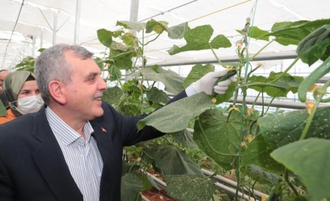 Urfa'da toplum temelli ilk hasat yapıldı