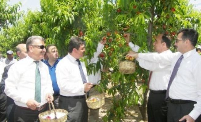 Tarsus'ta 'nektarin-şeftali Hasat Günü' Etkinliği