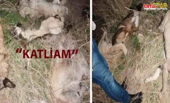Köpekler ölü bulundu