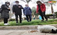 Dünya Kediler Günü'nde Balıklıgöl'de buluştular