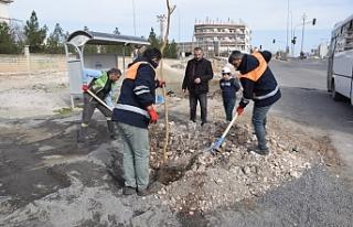 Viranşehir'de ağaçlandırma seferberliği...