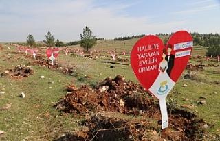 Haliliye'de yeni evlenenlere ömürlük hediye