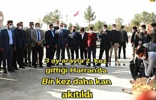 Harran'da Milli Birlik dayanışması yaşandı